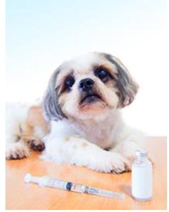 חיסון נגד כלבת